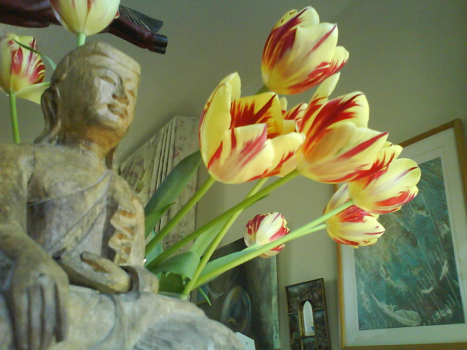 Buddha + tulips