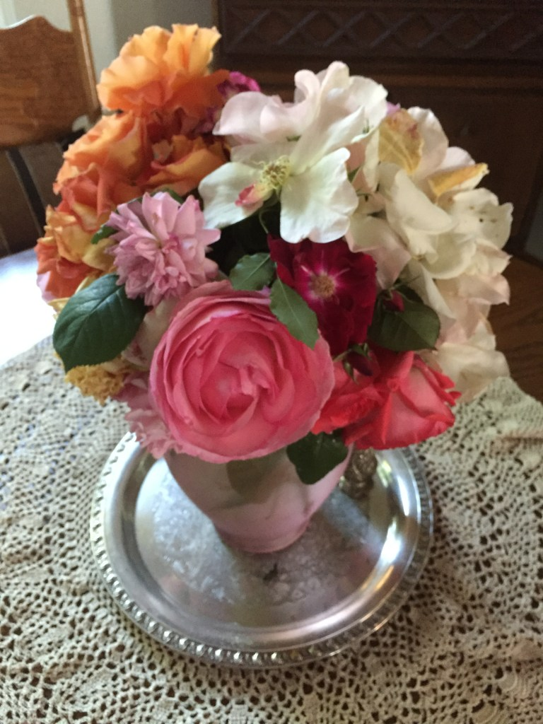 2016 has been the best first flush for our heritage roses