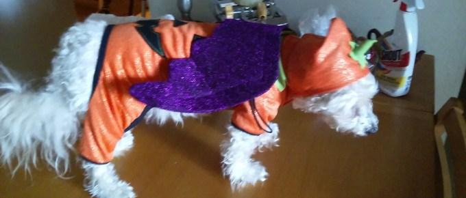 Bat wings!