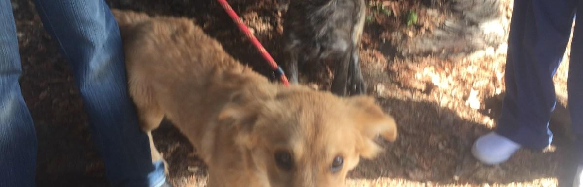 Muttopia Hatha Yoga plus Rescue Dogs