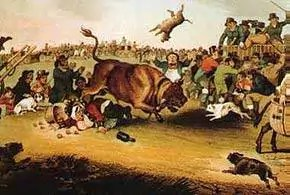 Bull Baiting, as illustrated in 1821 from Wikipedia