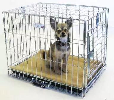 Dog in MTM crate. The quality of these crates surpasses everything else