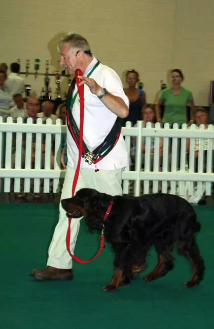Me At Just Dogs Live Training A Dog To Heel I Had Never Met Before In Under 2 Minutes.