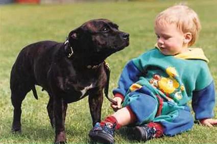 The Staffie Devil Dog or Nanny Dog