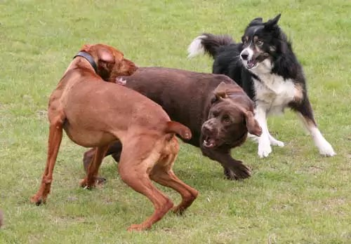 Dog Behaviourist Stan Rawlinson Explains Interdog and interhuman Aggression