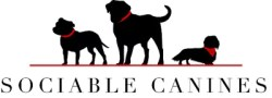 Sociable Canines the answer to all your dog sitting and walking problems