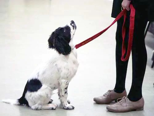 General obedience and socialisation can help a fearful timid dog