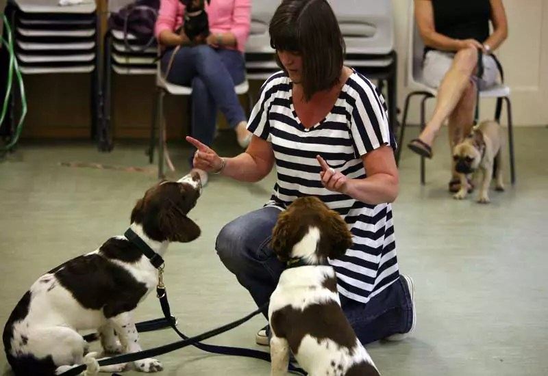 Socialisation is a must for a well rounded dog. My Puppy Classes
