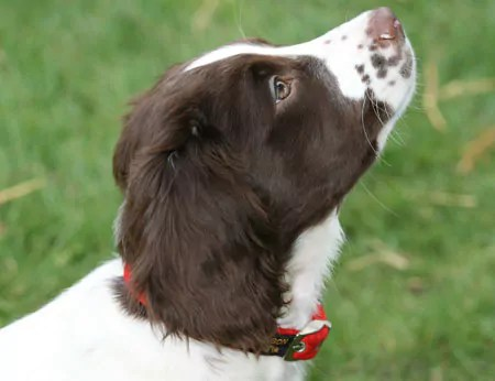 Making Eye contact can help the timid and fearful dog
