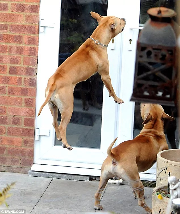 One of these dogs called Ratty attacked poor Keiron Guess