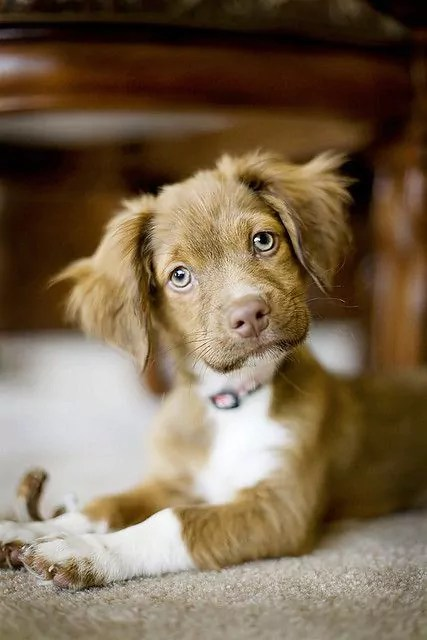 Which is the best Designer dog or Crossbreed