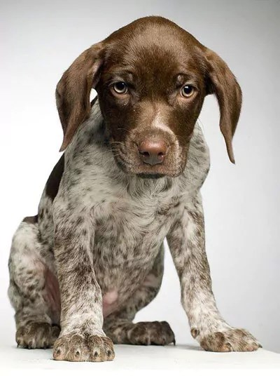Is Maize and Rice really the best food for this young puppy?