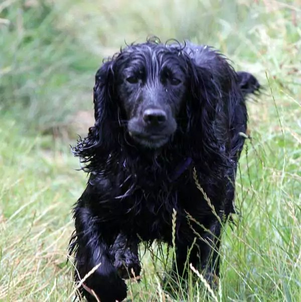 Get one of my Cockers in the countryside in spring. Alabama Rot Season?