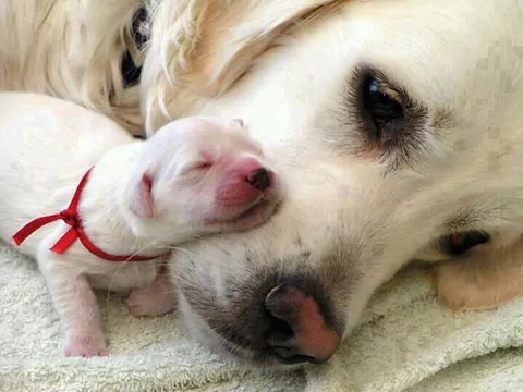 Would you take this puppy away from it's Mum and put it through a major operation?