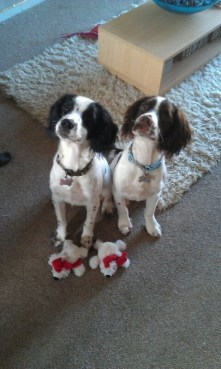 Oscar and Duke, owned by Emma Langley...