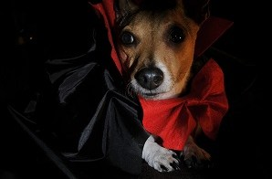 Women More Likely To Dress Pets Up For Halloween 2
