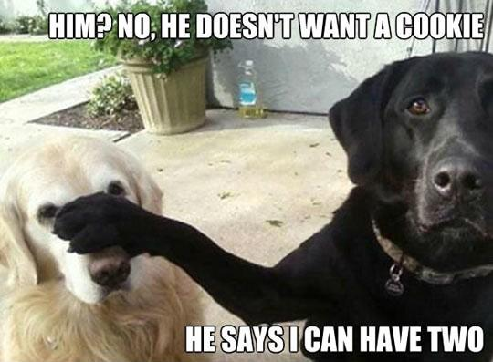 Funny Puppy Memes: 7 Funny Dog Memes (and One Gif) To Get The Week Started