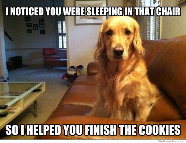 helpful-dog-meme