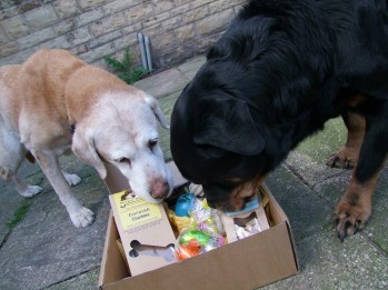 woof-box easter box review