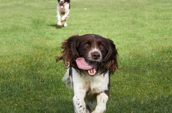 Do You Own Britain's Most Energetic Pet? 2