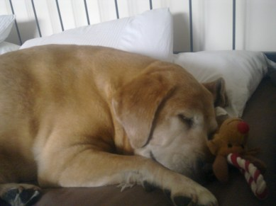 A sleepy Chloe