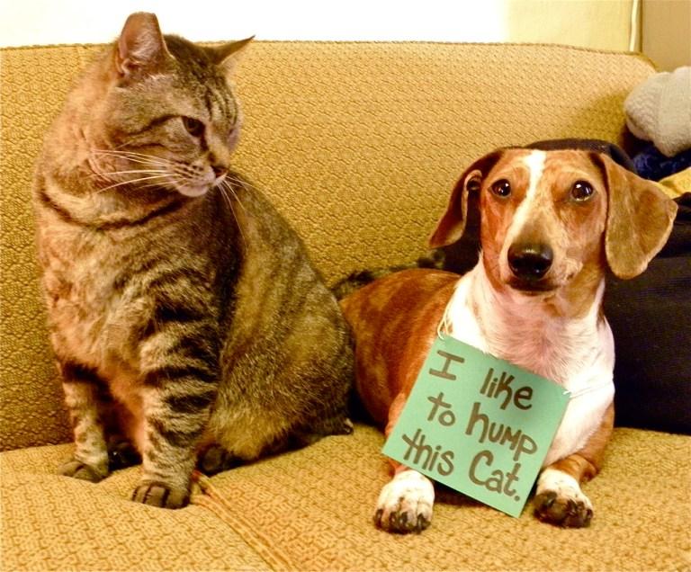 dog cat shame