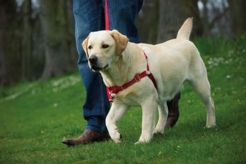 dog easy harness