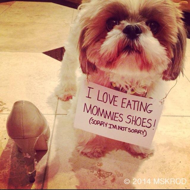 dog shoe eater shame