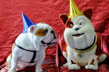 Happy Birthday Churchill, says lookalike 1