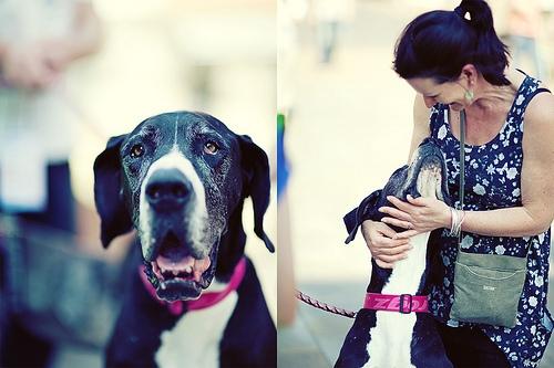 dog love photo