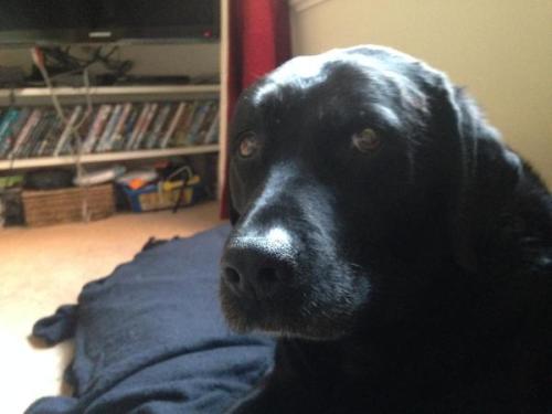 Dog postal vote