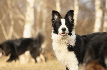 Lambing Season Warning to Dog Owners 1