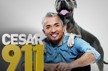Cesar Millan Controversy: National Geographic Issues Statement 1