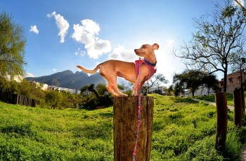 Dogs Can Get Skin Cancer Too - What All Owners Should Know 3