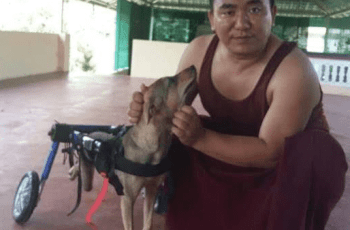 Exiled Tibetan Monks Rescued Beaten Dog - Just Look at Her Now 2