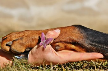 How Well Do You Know The UK Dog Laws? 1