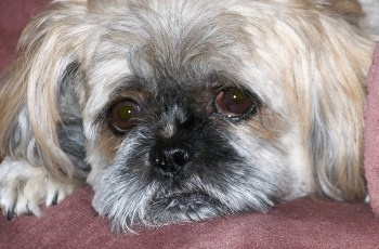 European Union Approach to Dog Breeding Trade To Be Discussed 2