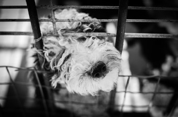 Why Did This MP Block One Of The UK's Most Committed Anti Puppy Farm Campaigning Groups? 2
