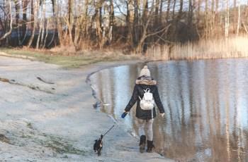 New Study Says Dogs Make Neighbourhoods Feel Safer 3