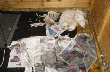 Puppy Farmers Who Sold Sick & Dying Puppies Guilty of Fraud 2
