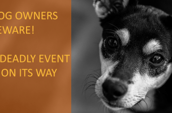 This Event Happens Every Year & It Can Be Very Dangerous For Dogs 2