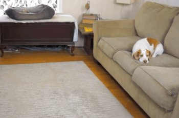 This Unsuspecting Dog is About to Get The Most Amazing Birthday Surprise 1