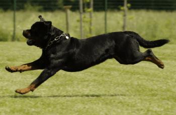 Charity Slams Scottish Parliament For Bringing Back 'Cruel' Dog Tail Docking 2