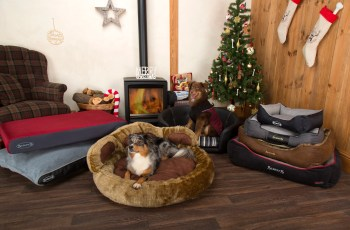 This Pet Company Is Giving Away £1,000 Prizes in December, Merry #ScruffsXmas17 6