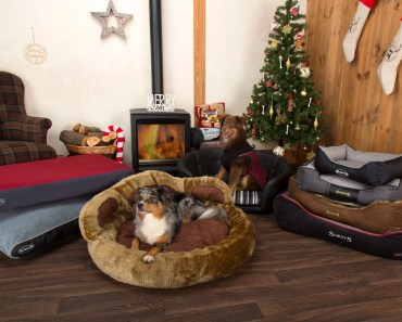 This Pet Company Is Giving Away £1,000 Prizes in December, Merry #ScruffsXmas17 4