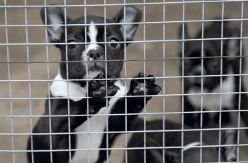 Charity Praises Scotland's Approach to Tackling Illegal Puppy Trade 3