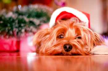 Christmas Might Not Be as Fun for Your Dog as You Think, Here's Why 3