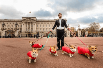 """Borrow My Corgi"" Service Launches - What The Hell Are They Thinking? 2"