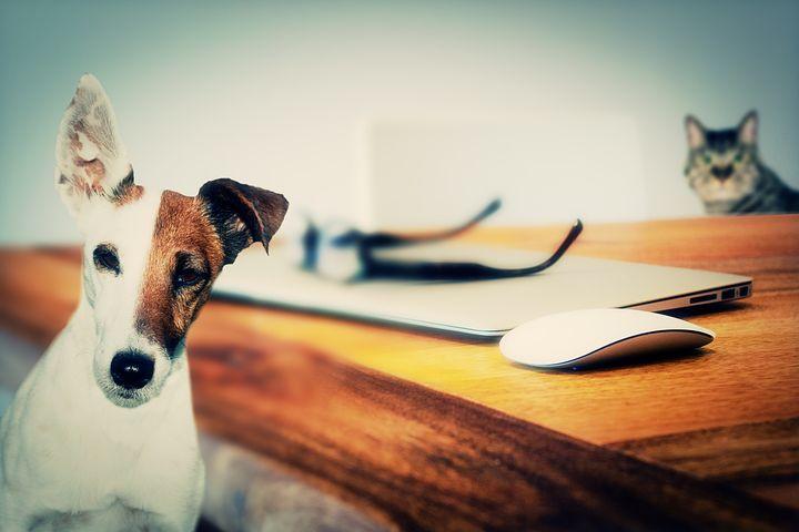 Dog v Cat Intelligence Study Produces Conclusive Result - Dog Magazine
