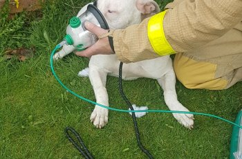 Firefighters Save Dog Trapped In House Fire 2